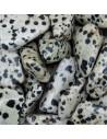 Jaspe dalmatien